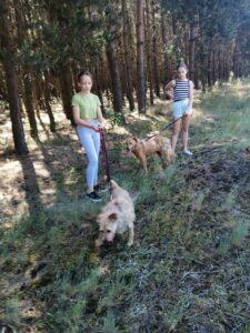 Wolontariusze wyprowadzili psiaki na spacer